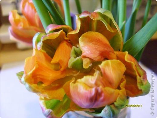 те же цветы....но уже в букетах ....утром дома........два простых ..........не шикарных.........и даже не средних букетика........срезаны......плохо это или хорошо.........кому плохо..........кому хорошо.........в чем истина...........опять игра......игра слов........кто-то любуется ....или кем-то любуются......ИГРА ЖИЗНИ..................продолжается фото 20