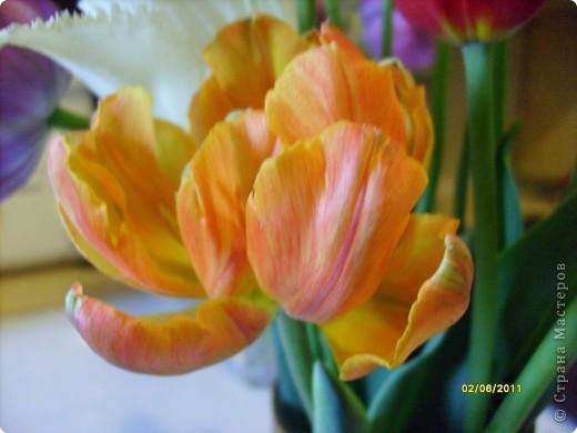 те же цветы....но уже в букетах ....утром дома........два простых ..........не шикарных.........и даже не средних букетика........срезаны......плохо это или хорошо.........кому плохо..........кому хорошо.........в чем истина...........опять игра......игра слов........кто-то любуется ....или кем-то любуются......ИГРА ЖИЗНИ..................продолжается фото 21