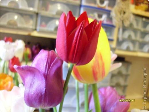 те же цветы....но уже в букетах ....утром дома........два простых ..........не шикарных.........и даже не средних букетика........срезаны......плохо это или хорошо.........кому плохо..........кому хорошо.........в чем истина...........опять игра......игра слов........кто-то любуется ....или кем-то любуются......ИГРА ЖИЗНИ..................продолжается фото 22