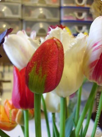 те же цветы....но уже в букетах ....утром дома........два простых ..........не шикарных.........и даже не средних букетика........срезаны......плохо это или хорошо.........кому плохо..........кому хорошо.........в чем истина...........опять игра......игра слов........кто-то любуется ....или кем-то любуются......ИГРА ЖИЗНИ..................продолжается фото 23