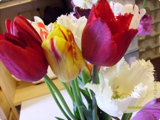 те же цветы....но уже в букетах ....утром дома........два простых ..........не шикарных.........и даже не средних букетика........срезаны......плохо это или хорошо.........кому плохо..........кому хорошо.........в чем истина...........опять игра......игра слов........кто-то любуется ....или кем-то любуются......ИГРА ЖИЗНИ..................продолжается фото 25