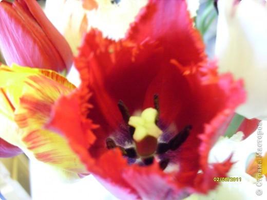 те же цветы....но уже в букетах ....утром дома........два простых ..........не шикарных.........и даже не средних букетика........срезаны......плохо это или хорошо.........кому плохо..........кому хорошо.........в чем истина...........опять игра......игра слов........кто-то любуется ....или кем-то любуются......ИГРА ЖИЗНИ..................продолжается фото 26