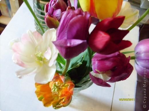 те же цветы....но уже в букетах ....утром дома........два простых ..........не шикарных.........и даже не средних букетика........срезаны......плохо это или хорошо.........кому плохо..........кому хорошо.........в чем истина...........опять игра......игра слов........кто-то любуется ....или кем-то любуются......ИГРА ЖИЗНИ..................продолжается фото 3