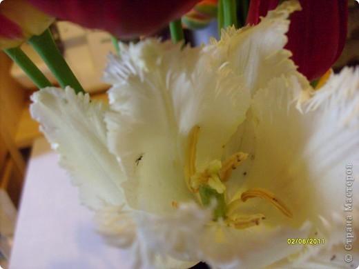 те же цветы....но уже в букетах ....утром дома........два простых ..........не шикарных.........и даже не средних букетика........срезаны......плохо это или хорошо.........кому плохо..........кому хорошо.........в чем истина...........опять игра......игра слов........кто-то любуется ....или кем-то любуются......ИГРА ЖИЗНИ..................продолжается фото 27