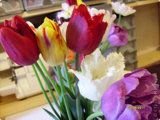 те же цветы....но уже в букетах ....утром дома........два простых ..........не шикарных.........и даже не средних букетика........срезаны......плохо это или хорошо.........кому плохо..........кому хорошо.........в чем истина...........опять игра......игра слов........кто-то любуется ....или кем-то любуются......ИГРА ЖИЗНИ..................продолжается фото 28