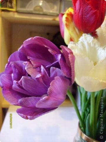 те же цветы....но уже в букетах ....утром дома........два простых ..........не шикарных.........и даже не средних букетика........срезаны......плохо это или хорошо.........кому плохо..........кому хорошо.........в чем истина...........опять игра......игра слов........кто-то любуется ....или кем-то любуются......ИГРА ЖИЗНИ..................продолжается фото 29