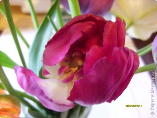 те же цветы....но уже в букетах ....утром дома........два простых ..........не шикарных.........и даже не средних букетика........срезаны......плохо это или хорошо.........кому плохо..........кому хорошо.........в чем истина...........опять игра......игра слов........кто-то любуется ....или кем-то любуются......ИГРА ЖИЗНИ..................продолжается фото 30