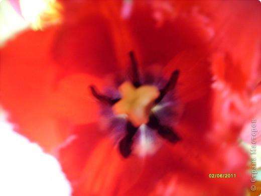 те же цветы....но уже в букетах ....утром дома........два простых ..........не шикарных.........и даже не средних букетика........срезаны......плохо это или хорошо.........кому плохо..........кому хорошо.........в чем истина...........опять игра......игра слов........кто-то любуется ....или кем-то любуются......ИГРА ЖИЗНИ..................продолжается фото 34