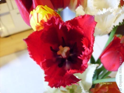 те же цветы....но уже в букетах ....утром дома........два простых ..........не шикарных.........и даже не средних букетика........срезаны......плохо это или хорошо.........кому плохо..........кому хорошо.........в чем истина...........опять игра......игра слов........кто-то любуется ....или кем-то любуются......ИГРА ЖИЗНИ..................продолжается фото 35