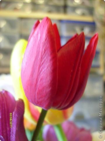 те же цветы....но уже в букетах ....утром дома........два простых ..........не шикарных.........и даже не средних букетика........срезаны......плохо это или хорошо.........кому плохо..........кому хорошо.........в чем истина...........опять игра......игра слов........кто-то любуется ....или кем-то любуются......ИГРА ЖИЗНИ..................продолжается фото 36