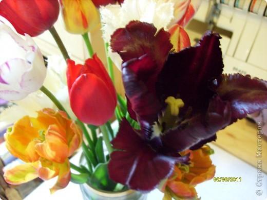те же цветы....но уже в букетах ....утром дома........два простых ..........не шикарных.........и даже не средних букетика........срезаны......плохо это или хорошо.........кому плохо..........кому хорошо.........в чем истина...........опять игра......игра слов........кто-то любуется ....или кем-то любуются......ИГРА ЖИЗНИ..................продолжается фото 4