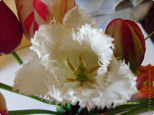 те же цветы....но уже в букетах ....утром дома........два простых ..........не шикарных.........и даже не средних букетика........срезаны......плохо это или хорошо.........кому плохо..........кому хорошо.........в чем истина...........опять игра......игра слов........кто-то любуется ....или кем-то любуются......ИГРА ЖИЗНИ..................продолжается фото 38