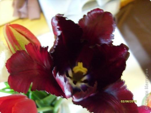те же цветы....но уже в букетах ....утром дома........два простых ..........не шикарных.........и даже не средних букетика........срезаны......плохо это или хорошо.........кому плохо..........кому хорошо.........в чем истина...........опять игра......игра слов........кто-то любуется ....или кем-то любуются......ИГРА ЖИЗНИ..................продолжается фото 39