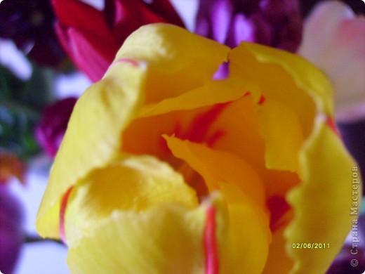 те же цветы....но уже в букетах ....утром дома........два простых ..........не шикарных.........и даже не средних букетика........срезаны......плохо это или хорошо.........кому плохо..........кому хорошо.........в чем истина...........опять игра......игра слов........кто-то любуется ....или кем-то любуются......ИГРА ЖИЗНИ..................продолжается фото 40