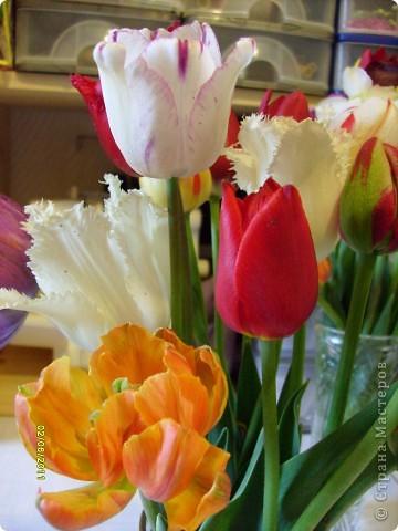 те же цветы....но уже в букетах ....утром дома........два простых ..........не шикарных.........и даже не средних букетика........срезаны......плохо это или хорошо.........кому плохо..........кому хорошо.........в чем истина...........опять игра......игра слов........кто-то любуется ....или кем-то любуются......ИГРА ЖИЗНИ..................продолжается фото 5