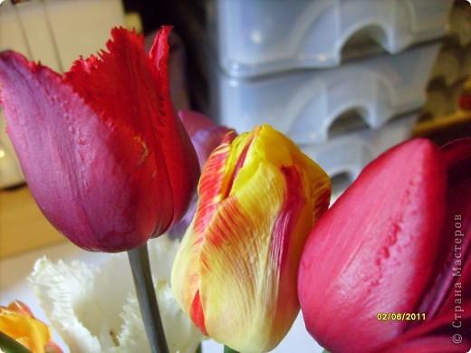 те же цветы....но уже в букетах ....утром дома........два простых ..........не шикарных.........и даже не средних букетика........срезаны......плохо это или хорошо.........кому плохо..........кому хорошо.........в чем истина...........опять игра......игра слов........кто-то любуется ....или кем-то любуются......ИГРА ЖИЗНИ..................продолжается фото 6