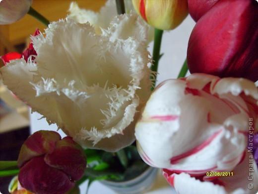 те же цветы....но уже в букетах ....утром дома........два простых ..........не шикарных.........и даже не средних букетика........срезаны......плохо это или хорошо.........кому плохо..........кому хорошо.........в чем истина...........опять игра......игра слов........кто-то любуется ....или кем-то любуются......ИГРА ЖИЗНИ..................продолжается фото 7