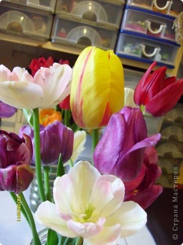 те же цветы....но уже в букетах ....утром дома........два простых ..........не шикарных.........и даже не средних букетика........срезаны......плохо это или хорошо.........кому плохо..........кому хорошо.........в чем истина...........опять игра......игра слов........кто-то любуется ....или кем-то любуются......ИГРА ЖИЗНИ..................продолжается фото 8