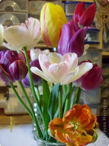 те же цветы....но уже в букетах ....утром дома........два простых ..........не шикарных.........и даже не средних букетика........срезаны......плохо это или хорошо.........кому плохо..........кому хорошо.........в чем истина...........опять игра......игра слов........кто-то любуется ....или кем-то любуются......ИГРА ЖИЗНИ..................продолжается фото 9