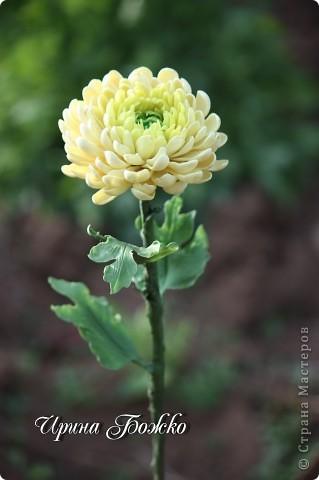 Наверно хризантему пробовали лепить многие. И у каждого она разная получается. вот такая получилась у меня. фото 1