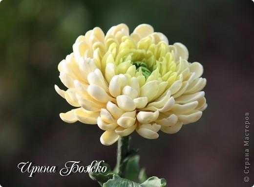 Наверно хризантему пробовали лепить многие. И у каждого она разная получается. вот такая получилась у меня. фото 2