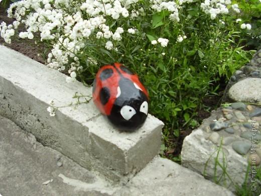 Вот такие букашки-жучки поселились в нашем саду фото 2