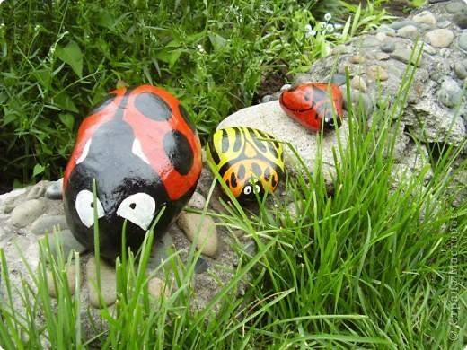 Вот такие букашки-жучки поселились в нашем саду фото 1