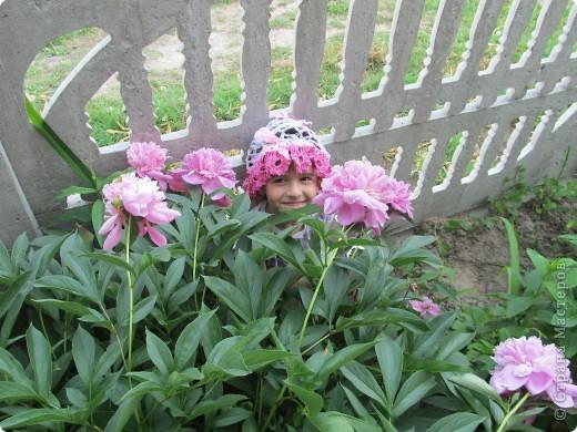 Вечерком заметила еще один распустившийся цветочек на клумбе. фото 1