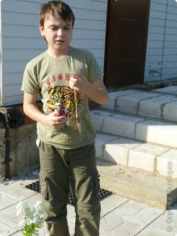 Первые тюльпаны в саду,а это ступня ноги моего сташего внука. фото 3
