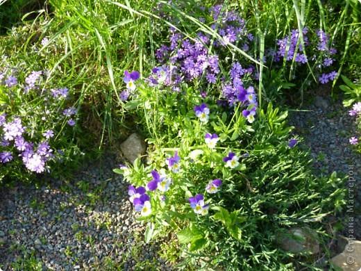 Первые тюльпаны в саду,а это ступня ноги моего сташего внука. фото 15