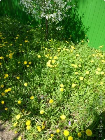 Первые тюльпаны в саду,а это ступня ноги моего сташего внука. фото 11