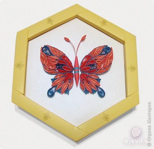 Розовая бабочка фото 3