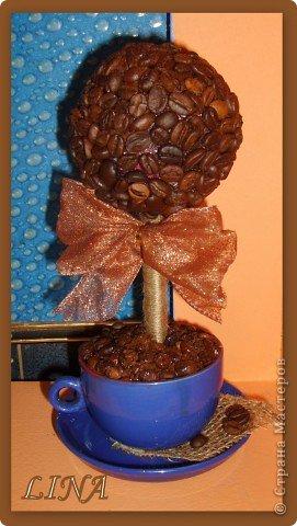 вот такое чудо вырасло в кофейной чашке:) фото 2