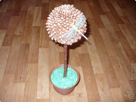Вот и у меня выросло деревце,. фисташковое. Сколько съедено орехов вспомнить страшно. фото 5