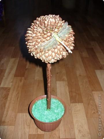 Вот и у меня выросло деревце,. фисташковое. Сколько съедено орехов вспомнить страшно. фото 1