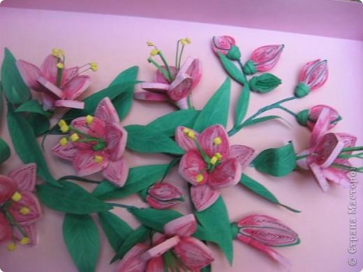 С приходом лета у меня расцвели лилии. фото 3