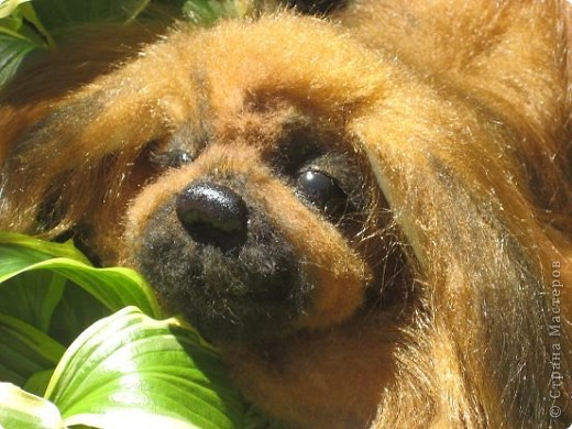 "Наш последний на сегодня ""шедевр""- собачка пекинесик фото 3"