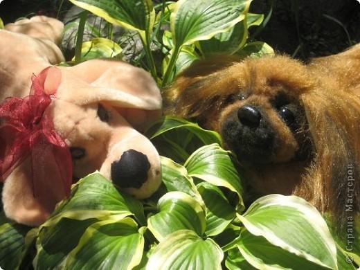 "Наш последний на сегодня ""шедевр""- собачка пекинесик фото 6"