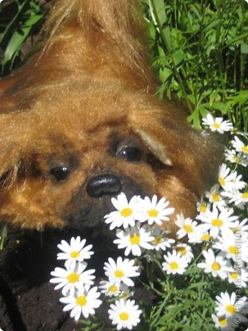 "Наш последний на сегодня ""шедевр""- собачка пекинесик фото 1"