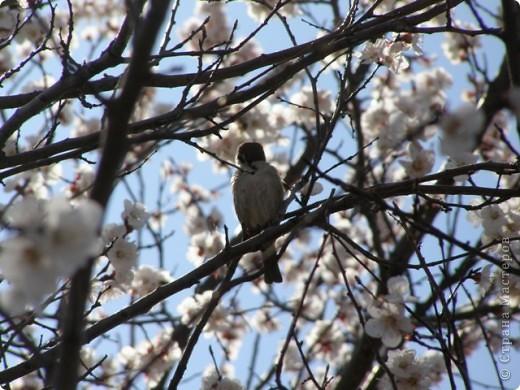 Вот так цвели деревья в апреле... фото 2