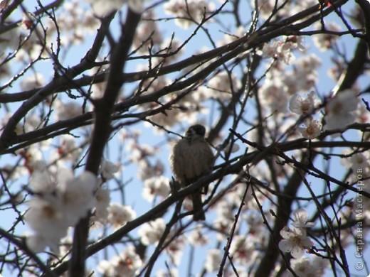 Вот так цвели деревья в апреле... фото 3