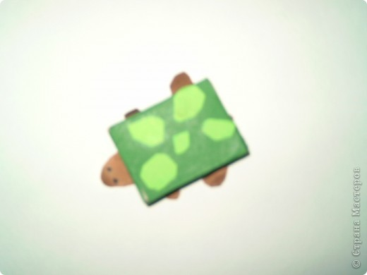 черепашка фото 1