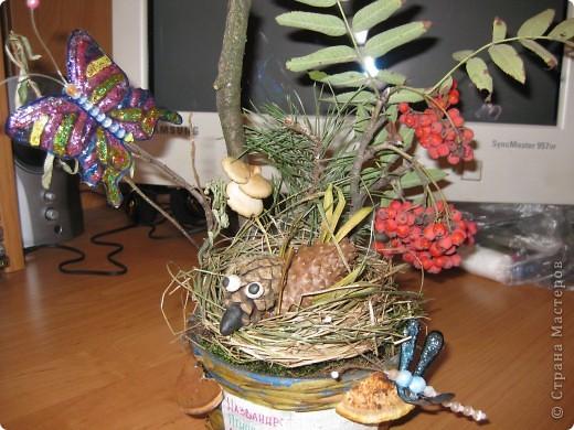птичка в гнезде фото 1