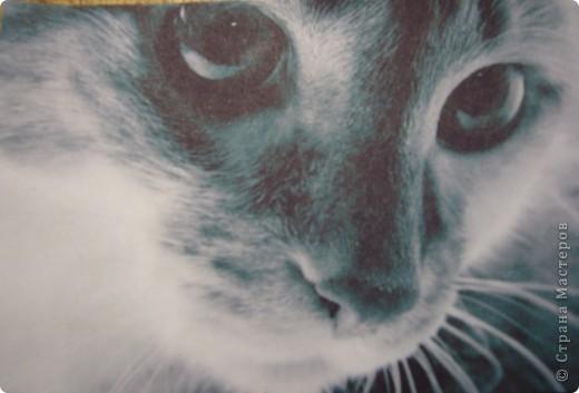 АТС.Кошки.Закрыта фото 1