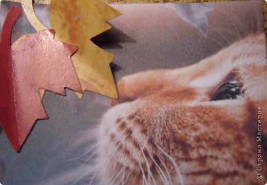 АТС.Кошки.Закрыта фото 2
