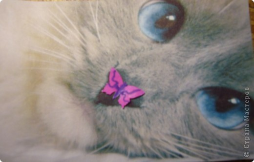 АТС.Кошки.Закрыта фото 5