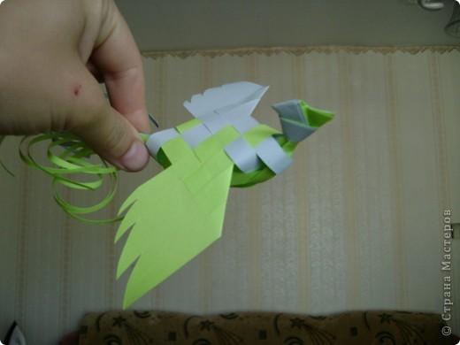 Мои птички фото 3