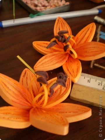 оранжевые лилии фото 2