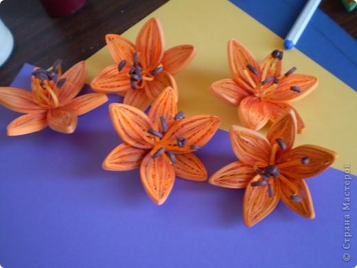 оранжевые лилии фото 3