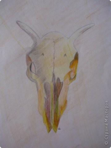 Мои рисунки фото 9